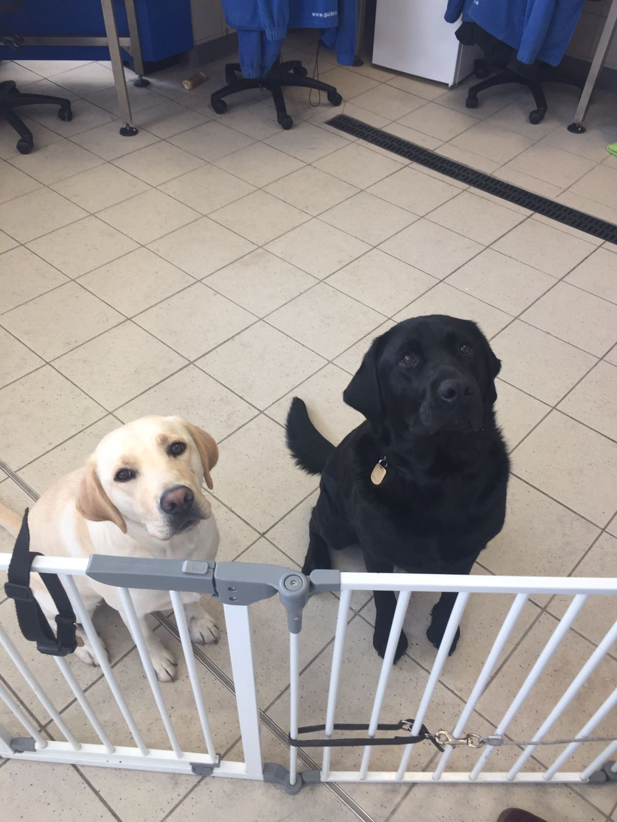 Guide dogs at MMU